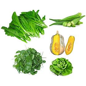 Combo Rau Sạch Vicofarm Gồm 5 Loại: Cải Bẹ Xanh, Đậu Bắp, Salad Thủy Canh, Bí Hồ Lô, Rau Má