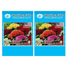 Bộ 2 Gói Hạt Giống Hoa Mào Gà Búa - Mix Nhiều Màu (Celosia) 100h