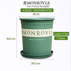 3 Chậu nhựa trồng cây MONROVIA 7 GL, chậu trồng cây, chậu cây cảnh mini, để bàn, treo ban công, treo tường, cao cấp, chính hãng thương hiệu MONROVIA