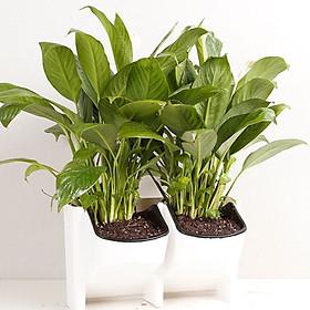 Plant Pots Hanging Flower Pot 2-Pocket FlowerPot Stackable Stackable