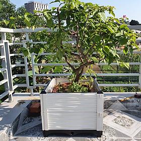 CHẬU GHÉP THÔNG MINH (KT: 50 x 50 x 39 Cm): Phù hợp mọi loại cây trồng, diện tích và không gian - Sang trọng - Hiệu quả - Độ bền cao - Nhựa PP an toàn.