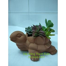 Chậu đất nung trồng cây - Chậu trồng cây sen đá, xương rồng chú rùa nhỏ  có lỗ thoát nước ( không bao gồm cây)