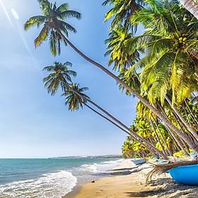 Tour Phan Thiết - Mũi Né 2N1Đ: Resort 3 -...