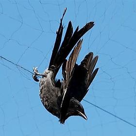 Lưới Bẫy Chim Tổng Hợp