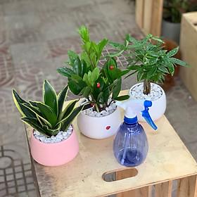 Combo: cây Kim Tiền, cây Kim Ngân, cây Lưỡi Hổ, bình tưới cây