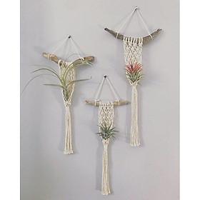 bộ 3 dây macrame treo cây không khí