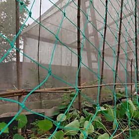 Lưới làm giàn leo cho cây màu xanh