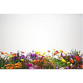 Giấy dán tường - Hoa H50