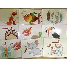 Animals' body part Flashcards - Thẻ học tiếng Anh chủ đề các bộ phận cơ thể động vật - 15 cards