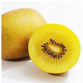 [Chỉ Giao HN] - Kiwi vàng - 1kg