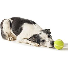 Bóng tennis cũ , bóng tập phản xạ thú cưng