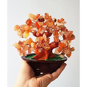 Cây Tài Lộc bằng đá Mã Não đỏ size 16cm