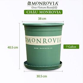 Chậu nhựa trồng cây MONROVIA 7 GL, chậu trồng cây, chậu cây cảnh mini, để bàn, treo ban công, treo tường, cao cấp, chính hãng thương hiệu MONROVIA