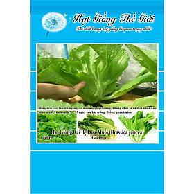 10g Hạt Giống Cải Bẹ Dưa Muối (Brassica juncea)