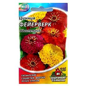 Hạt giống hoa Cúc Lá Nhám Mix 0.1 Gr
