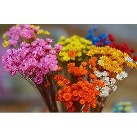 50 Bông Hoa Tuyết Bất Tử