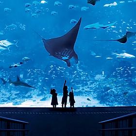 Vé Tham Quan Thủy Cung Sea Aquarium Singapore Tại Sentosa