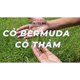 Hạt giống cỏ thảm Barmuda 200g (cỏ chỉ, cỏ gà) - cỏ sân vườn, công trình, chăn nuôi