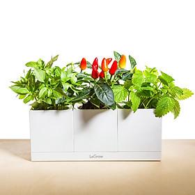 Bộ 3 chậu trồng cây thông minh - Basic Kit