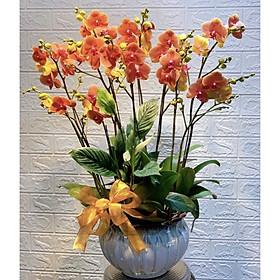 Chậu hoa Lan Hồ Điệp Đà Lạt - Mẫu 26 - Đường kính chậu 20 x cao 50 cm - Mầu Đỏ - Chậu hoa, cây cảnh tặng khai trương, tân gia