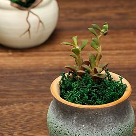Cỏ sợi - rêu sợi - bột rêu cỏ giả dùng phủ chậu cây, trang trí mô hình