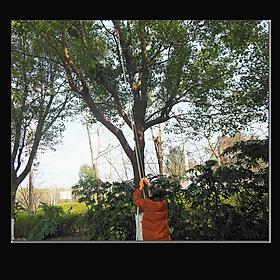 Đầu kéo cắt cành cây trên cao,hái quả ,kết hợp cưa cành