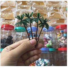Cây Dừa Trang Trí Tiểu Cảnh Sen Đá, Cây Bonsai, Sen Đá, Xương Rồng