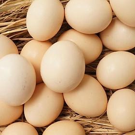 [Chỉ giao HN] - Trứng gà Thảo Mộc - 12 quả