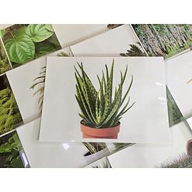 Plant Flashcards - Thẻ học tiếng Anh chủ đề thực vật - 20 cards