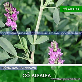 Hạt cỏ chăn nuôi chăn nuôi Alfalfa Linh Lăng 1kg
