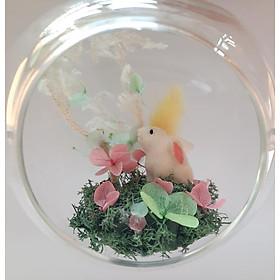 Quả cầu hoa khô Trăng thỏ ngọc