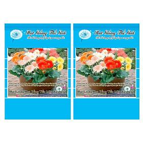 Bộ 2 Gói Hạt Giống Hoa Đồng Tiền - Mix (Gerbera) 10h
