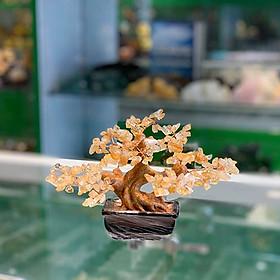 Cây thạch anh vàng nhỏ dáng truyền thống (cây chiêu tài) FKC108