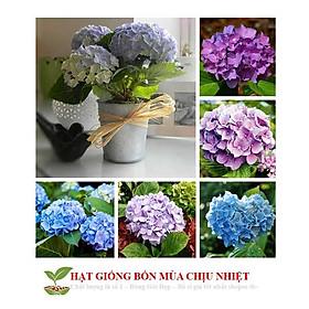 Hg16 Gói 10 Hạt giống hoa cẩm tú cầu CHỊU NHIỆT ĐẾN MÙA TRỒNG TẾT