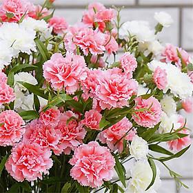 Bộ 1 gói Hạt giống hoa cẩm chướng kép