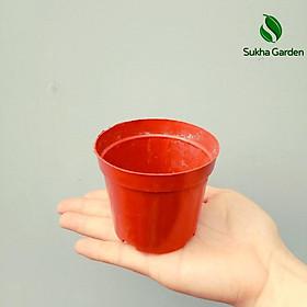 Set 10 Chậu Nhựa trồng sen đá, xương rồng đủ kích thước, chậu trồng cây