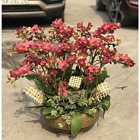 Chậu hoa Lan Hồ Điệp Đà Lạt - Mẫu 54 - Đường kính 30 x cao 80 cm - Mầu Đỏ - Chậu hoa, cây cảnh tặng khai trương, tân gia