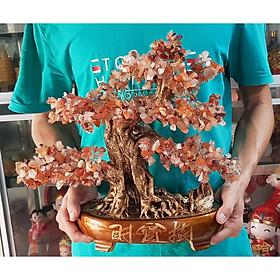 Cây Tài Lộc đá mã não dáng bonsai màu đỏ cam size 40cm