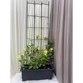 KHUNG HOA LEO XẾP GỌN - KHUNG TRỒNG CÂY ĐA NĂNG - Dùng làm khung giá đỡ cho hoa hồng leo, cây hoa leo tạo vẻ sang trọng tinh tế cho khu vườn