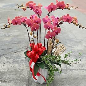 Chậu hoa Lan Hồ Điệp Đà Lạt - Mẫu 42 - Đường kính chậu 25 x cao 55 cm - Mầu Đỏ - Chậu hoa, cây cảnh tặng khai trương, tân gia