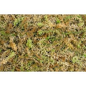 500 gram dớn mềm trồng lan