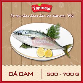 HCM - Cá cam (500 - 700g) - Thích hợp với các món kho, chiên, rim, nướng, sốt cà chua - [Giao nhanh TPHCM]