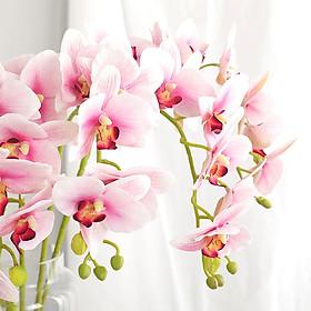 Hoa Lan Hồ Điệp Giả Trang Trí (70cm)