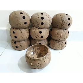 Combo 5 Gáo Dừa Lâu Năm Trồng Lan 11-13cm