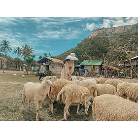 Combo Tour Hang Rái Vườn Nho Đồng Cừu và Khám Phá Vịnh Nha Trang