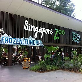 Vé Tham Quan Sở Thú Singapore - Singapore Zoo