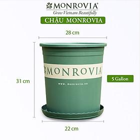 Chậu nhựa trồng cây MONROVIA 5 GL, chậu trồng cây, chậu cây cảnh mini, để bàn, treo ban công, treo tường, cao cấp, chính hãng thương hiệu MONROVIA
