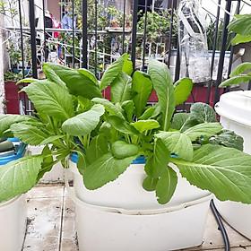 Bộ 2 thùng trồng rau ăn lá thủy canh- tặng 2 hủ dinh dưỡng SẠCH -AN TOÀN+ viên nén ươm hạt