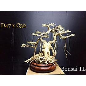 Gỗ Lũa Bonsai Thuỷ sinh D47xC32 dành cho trang trí bể cá