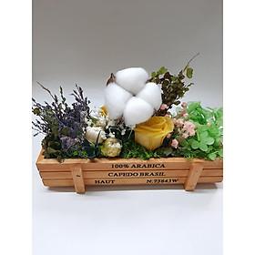 Hộp hoa khô Vườn hoa buổi sáng